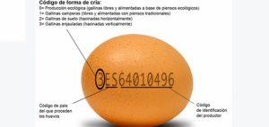 huevos ecologicos 4203 300x142